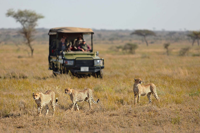 luxury safari serengeti